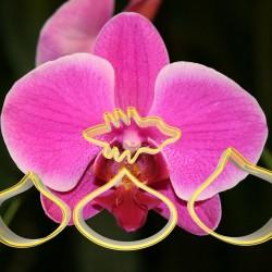 Orkide Şeker Hamuru Çiçek Yapım Seti 4'lü